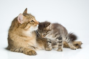 Introduce a new cat into the home