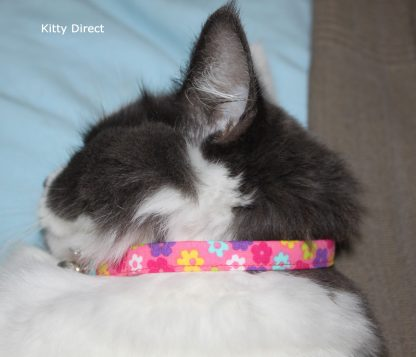 Daisy flower kitten and cat collar 13