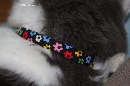 Daisy flower kitten and cat collar 20