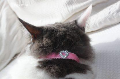 Handmade velvet diamante cat kitten safety collar_Pink 1
