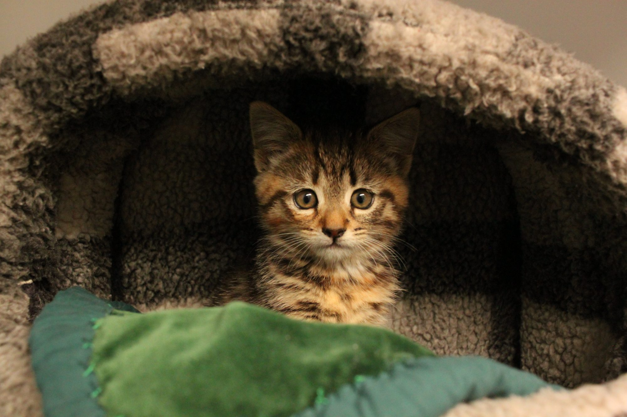 Is a cat the right pet for you - 10 top tips