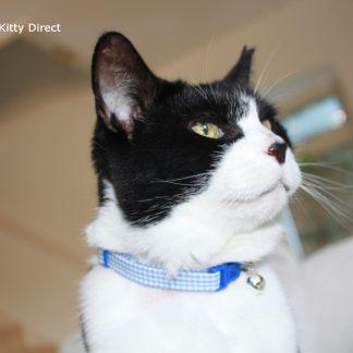 Handmade blue gingham cat kitten collar_5