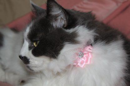 handmade cat kitten pink diamante flower_6