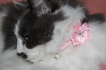 handmade cat kitten pink diamante flower_7