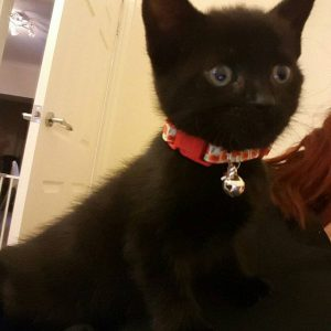 Red Poppies Handmade Kitten Collar review