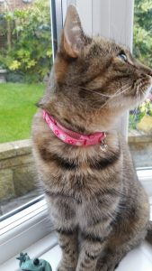 Red Tartan Handmade Cat collar review