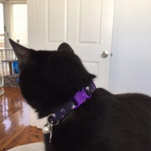 Purple Stars Cotton cat collar review_3
