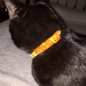 Orange glitter collar review
