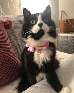 Pink diamante handmade kitten collar review