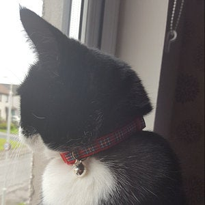 Cat and Kitten collar buyer reviews - Kitty Direct