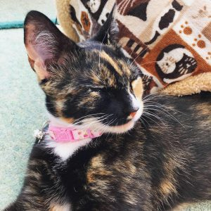 Pink rose handmade cat kitten collar review