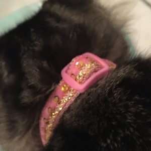 Asian inspired handmade cat kitten collar