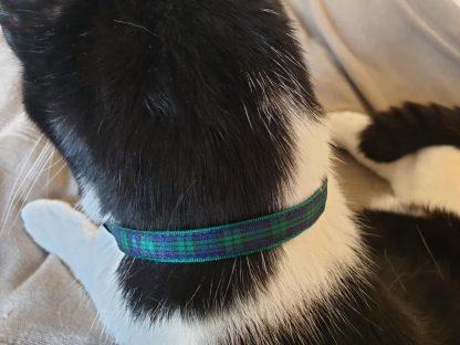 Green Blue Tartan Cat/Kitten Safety collar_2