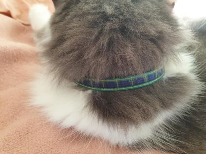 Scottish tartan cat kitten collar blue green_2