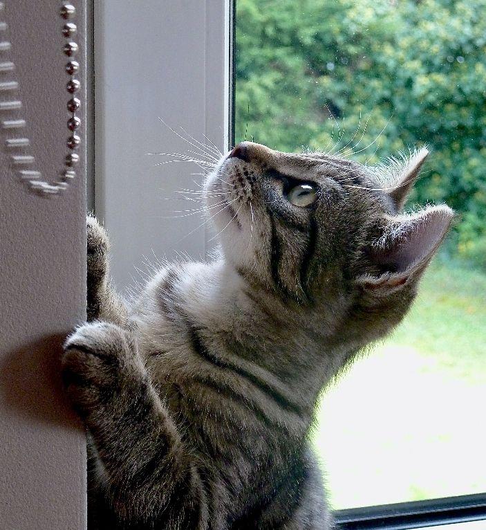 cat by door