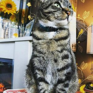 Hayley and Alfie 2 cat collar