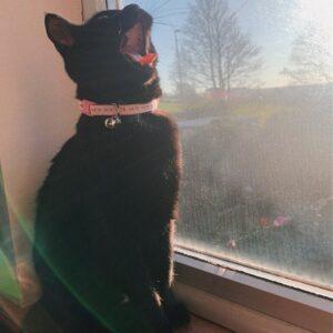 Zelah cat